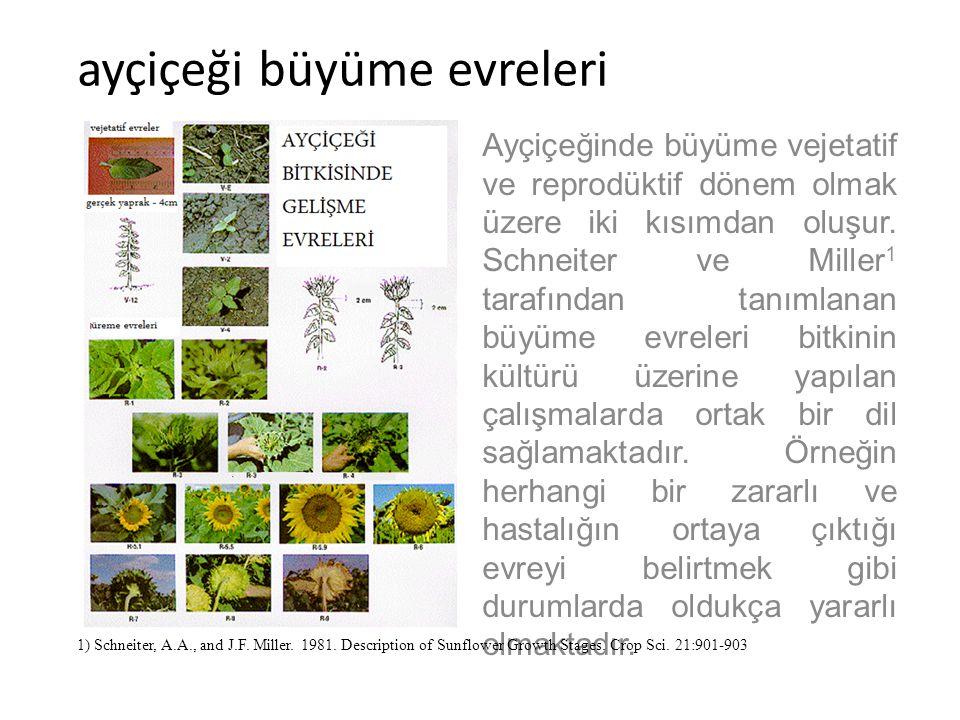 ayçiçeği büyüme evreleri Ayçiçeği büyümesi için gereken süre ile çeşitli gelişme evreleri arasındaki süre bitkinin genetik yapısı ile yetiştirme ortamı ve iklimsel çevreye bağlıdır.