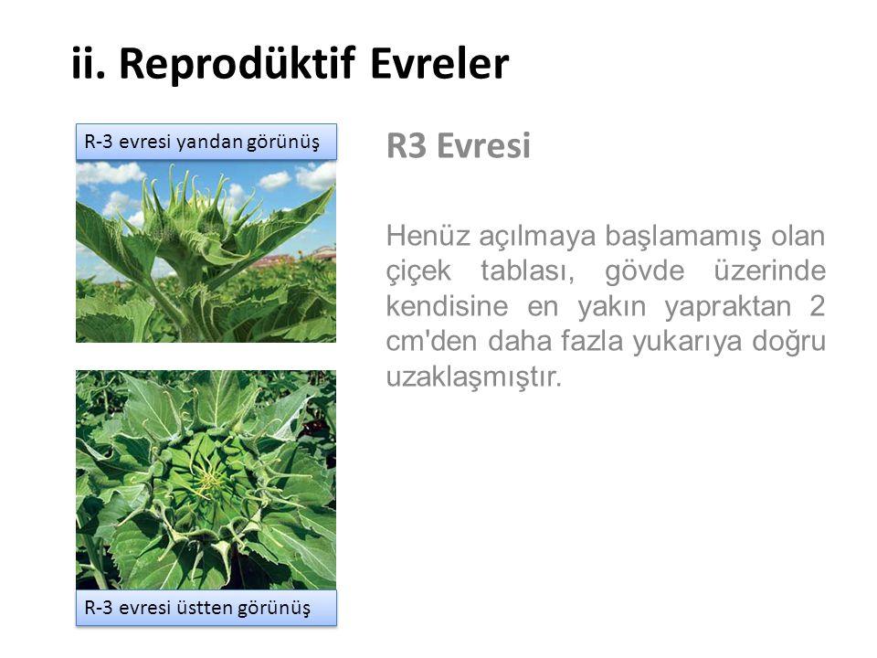 ii. Reprodüktif Evreler R3 Evresi Henüz açılmaya başlamamış olan çiçek tablası, gövde üzerinde kendisine en yakın yapraktan 2 cm'den daha fazla yukarı