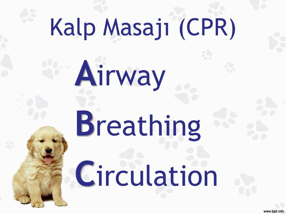 Kalp Masajı (CPR) A A irway B B reathing C C irculation