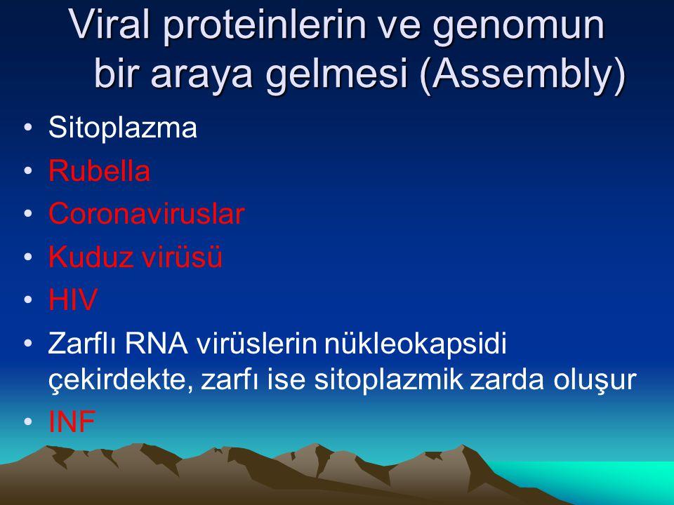 Viral proteinlerin ve genomun bir araya gelmesi (Assembly) Sitoplazma Rubella Coronaviruslar Kuduz virüsü HIV Zarflı RNA virüslerin nükleokapsidi çeki