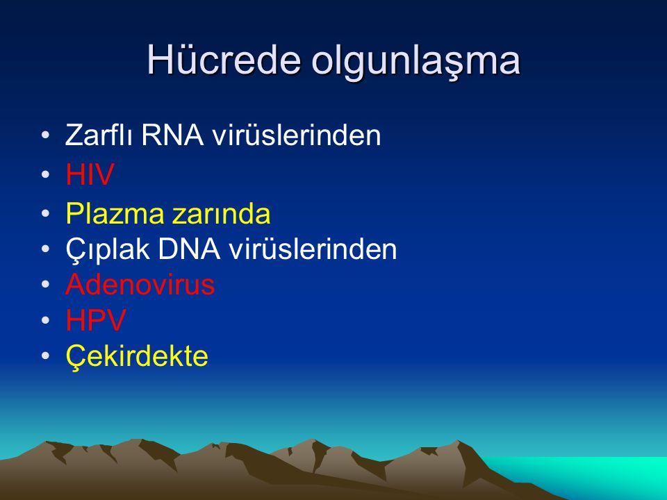 Hücrede olgunlaşma Zarflı RNA virüslerinden HIV Plazma zarında Çıplak DNA virüslerinden Adenovirus HPV Çekirdekte