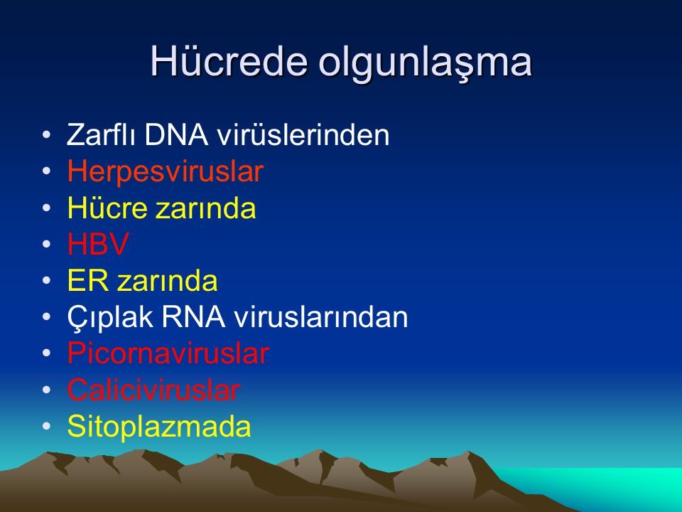 Hücrede olgunlaşma Zarflı DNA virüslerinden Herpesviruslar Hücre zarında HBV ER zarında Çıplak RNA viruslarından Picornaviruslar Caliciviruslar Sitopl