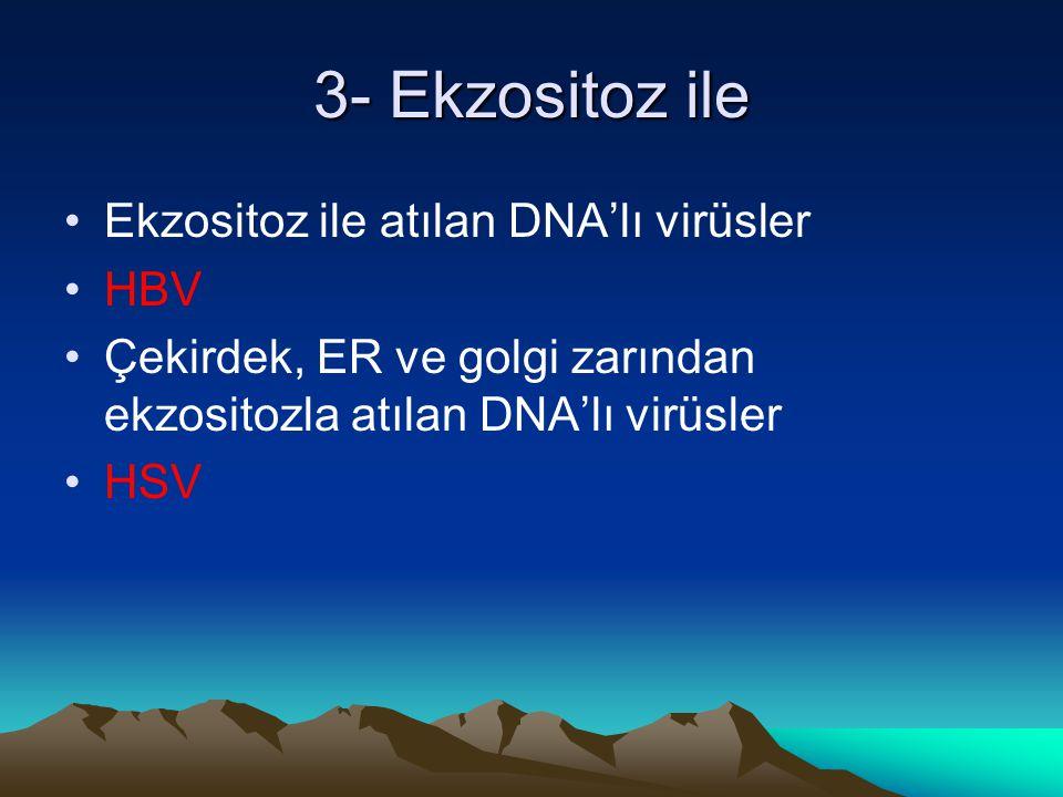 3- Ekzositoz ile Ekzositoz ile atılan DNA'lı virüsler HBV Çekirdek, ER ve golgi zarından ekzositozla atılan DNA'lı virüsler HSV