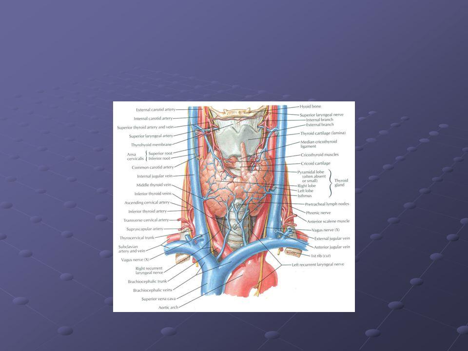 Tiroid Bezinin Çalışması Nasıl Kontrol Edilir?