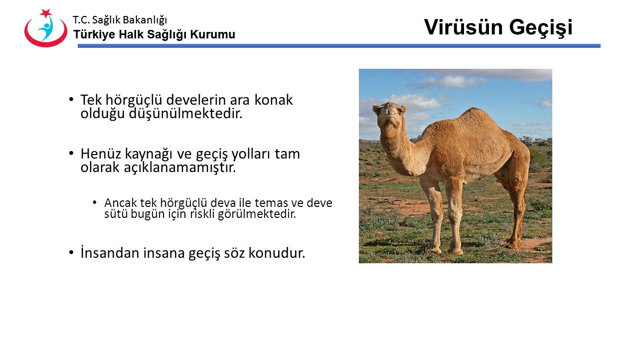 T.C. Sağlık Bakanlığı Türkiye Halk Sağlığı Kurumu T.C. Sağlık Bakanlığı Türkiye Halk Sağlığı Kurumu MERS-CoV Etken Etken virüs Coronaviridae ailesi iç