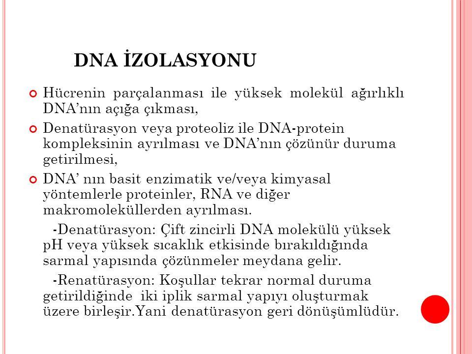 DNA İZOLASYONU Hücrenin parçalanması ile yüksek molekül ağırlıklı DNA'nın açığa çıkması, Denatürasyon veya proteoliz ile DNA-protein kompleksinin ayrılması ve DNA'nın çözünür duruma getirilmesi, DNA' nın basit enzimatik ve/veya kimyasal yöntemlerle proteinler, RNA ve diğer makromoleküllerden ayrılması.