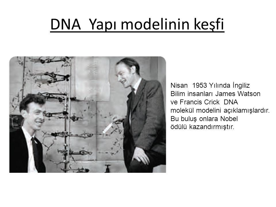 DNA Yapı modelinin keşfi Nisan 1953 Yılında İngiliz Bilim insanları James Watson ve Francis Crick DNA molekül modelini açıklamışlardır. Bu buluş onlar