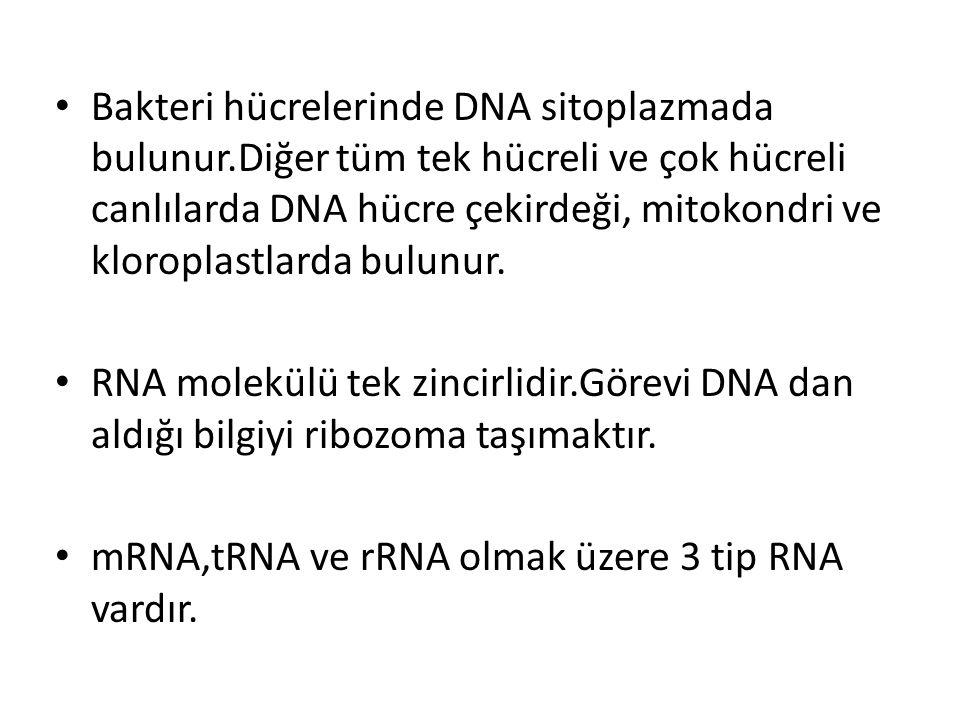 Bakteri hücrelerinde DNA sitoplazmada bulunur.Diğer tüm tek hücreli ve çok hücreli canlılarda DNA hücre çekirdeği, mitokondri ve kloroplastlarda bulun