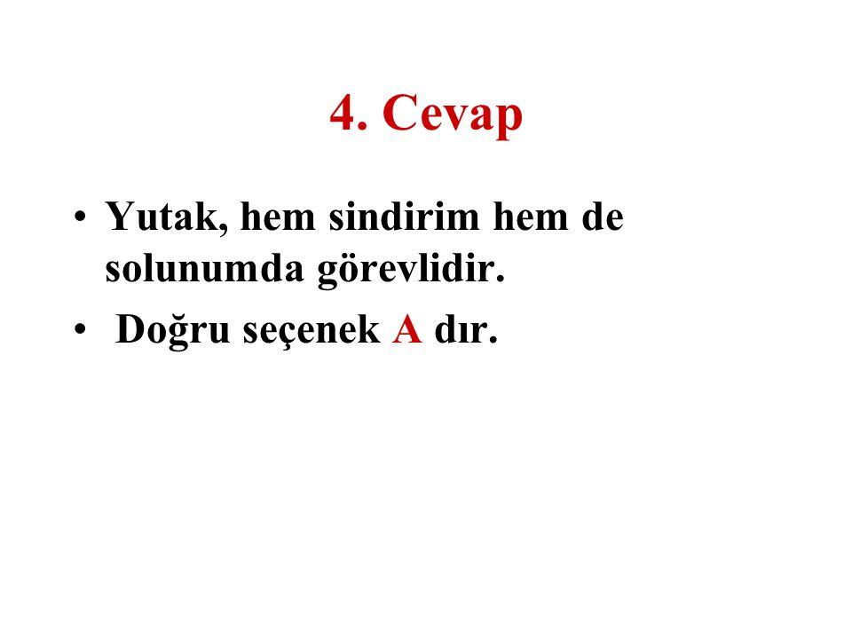 4. Cevap Yutak, hem sindirim hem de solunumda görevlidir. Doğru seçenek A dır.