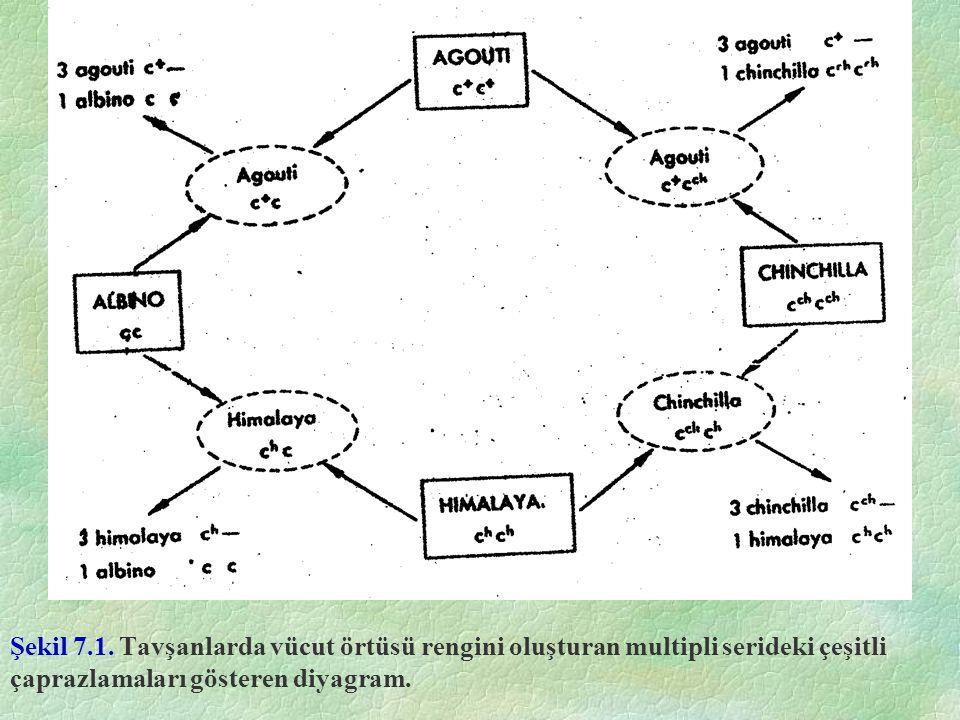 Şekil 7.1. Tavşanlarda vücut örtüsü rengini oluşturan multipli serideki çeşitli çaprazlamaları gösteren diyagram.
