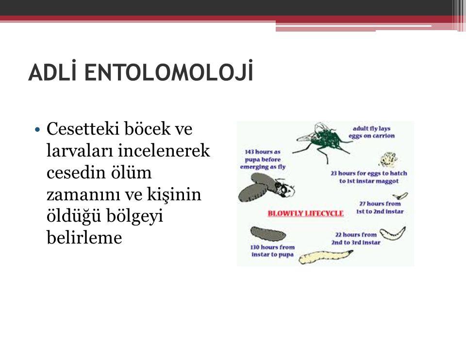 ADLİ ENTOLOMOLOJİ Cesetteki böcek ve larvaları incelenerek cesedin ölüm zamanını ve kişinin öldüğü bölgeyi belirleme