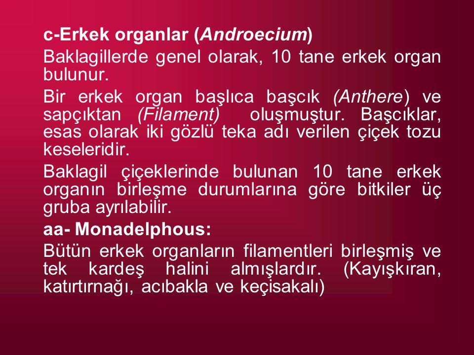 c-Erkek organlar (Androecium) Baklagillerde genel olarak, 10 tane erkek organ bulunur. Bir erkek organ başlıca başcık (Anthere) ve sapçıktan (Filament