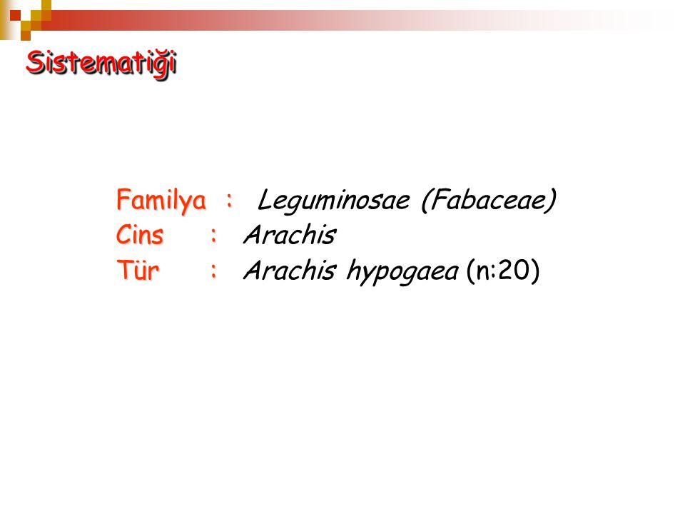 Familya: Familya: Leguminosae (Fabaceae) Cins: Cins: Arachis Tür: Tür: Arachis hypogaea (n:20) SistematiğiSistematiği