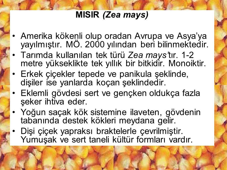 MISIR (Zea mays) Amerika kökenli olup oradan Avrupa ve Asya'ya yayılmıştır. MÖ. 2000 yılından beri bilinmektedir. Tarımda kullanılan tek türü Zea mays