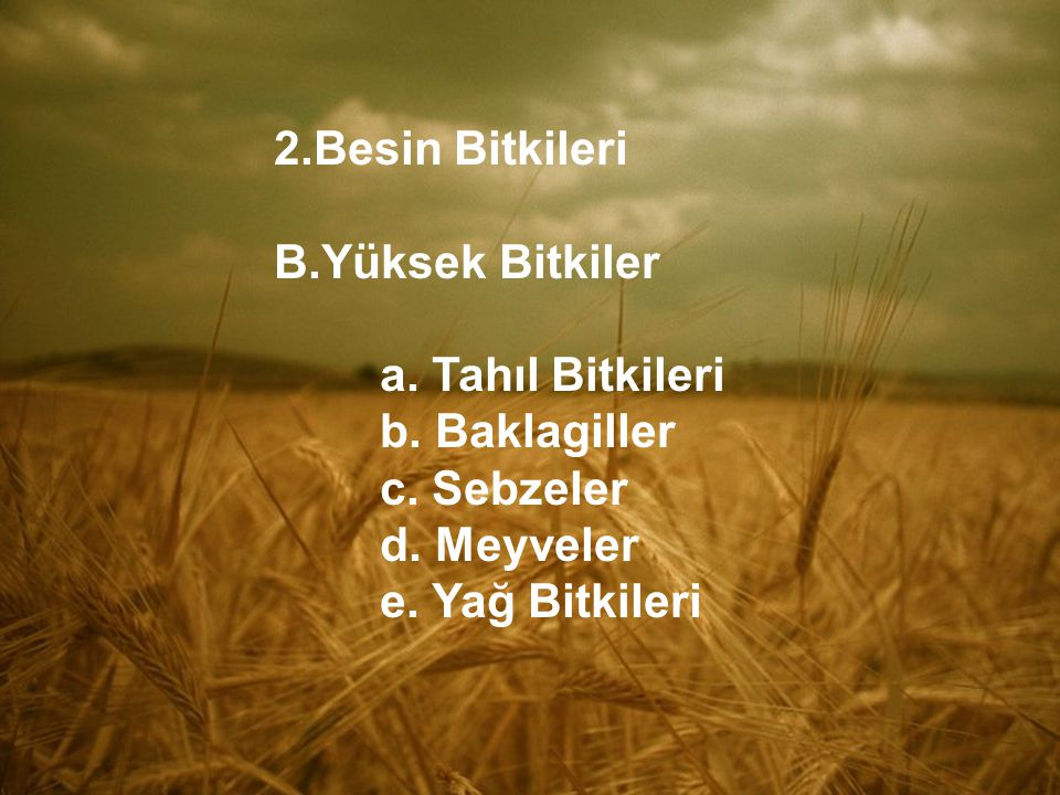 2.Besin Bitkileri B.Yüksek Bitkiler a. Tahıl Bitkileri b. Baklagiller c. Sebzeler d. Meyveler e. Yağ Bitkileri
