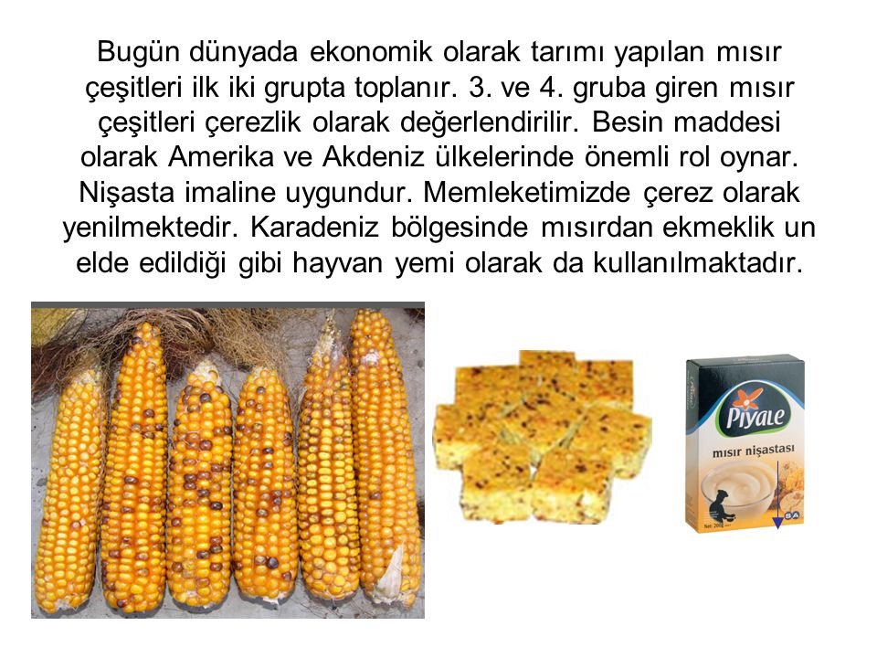 Bugün dünyada ekonomik olarak tarımı yapılan mısır çeşitleri ilk iki grupta toplanır. 3. ve 4. gruba giren mısır çeşitleri çerezlik olarak değerlendir