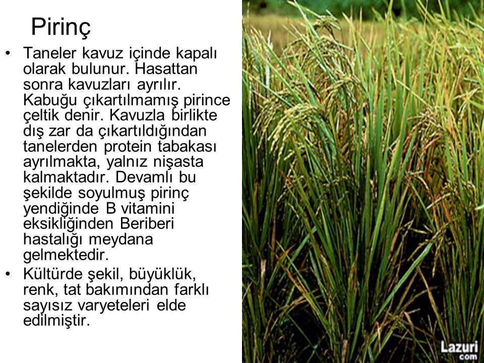 Pirinç Taneler kavuz içinde kapalı olarak bulunur. Hasattan sonra kavuzları ayrılır. Kabuğu çıkartılmamış pirince çeltik denir. Kavuzla birlikte dış z