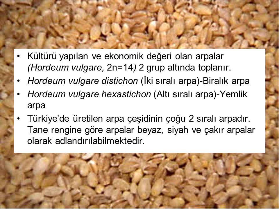 Kültürü yapılan ve ekonomik değeri olan arpalar (Hordeum vulgare, 2n=14) 2 grup altında toplanır. Hordeum vulgare distichon (İki sıralı arpa)-Biralık