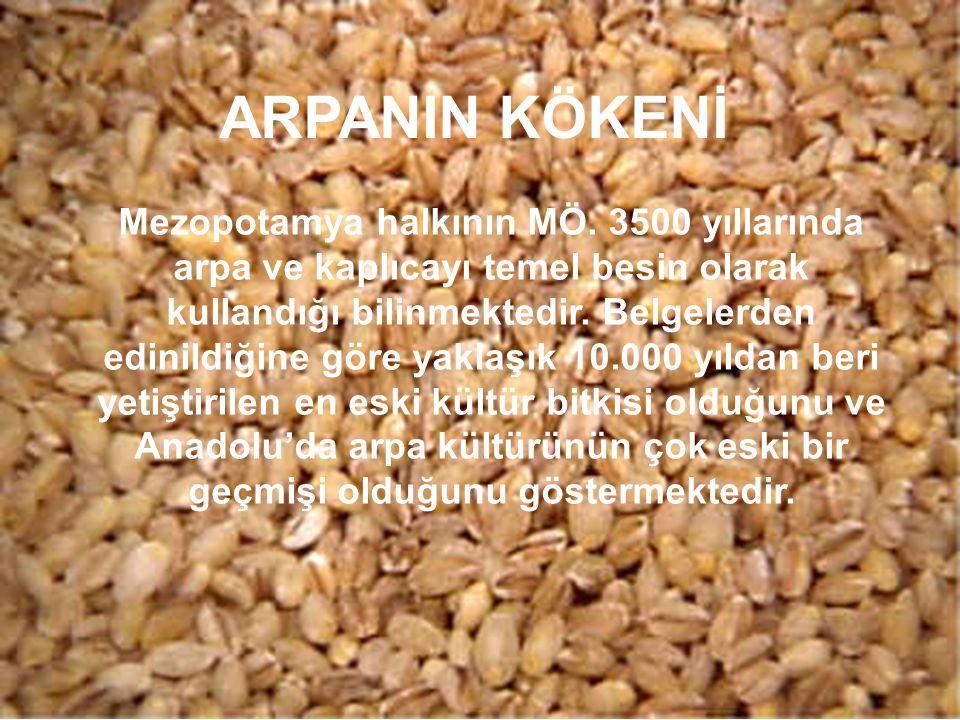 ARPANIN KÖKENİ Mezopotamya halkının MÖ. 3500 yıllarında arpa ve kaplıcayı temel besin olarak kullandığı bilinmektedir. Belgelerden edinildiğine göre y