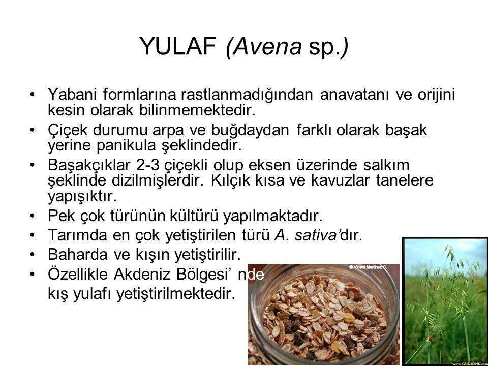 YULAF (Avena sp.) Yabani formlarına rastlanmadığından anavatanı ve orijini kesin olarak bilinmemektedir. Çiçek durumu arpa ve buğdaydan farklı olarak