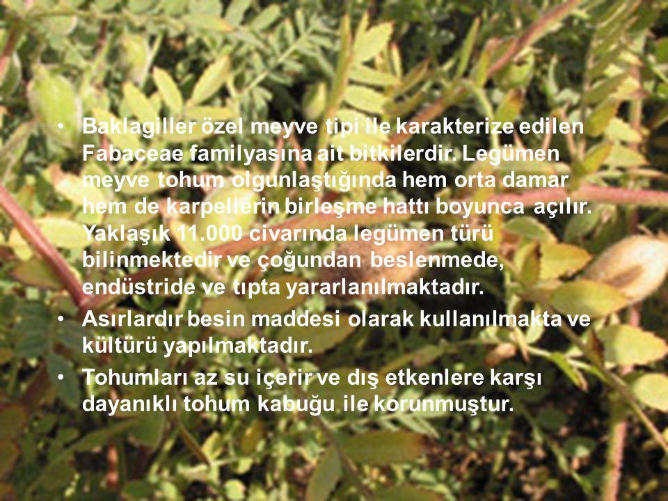 Baklagiller özel meyve tipi ile karakterize edilen Fabaceae familyasına ait bitkilerdir. Legümen meyve tohum olgunlaştığında hem orta damar hem de kar