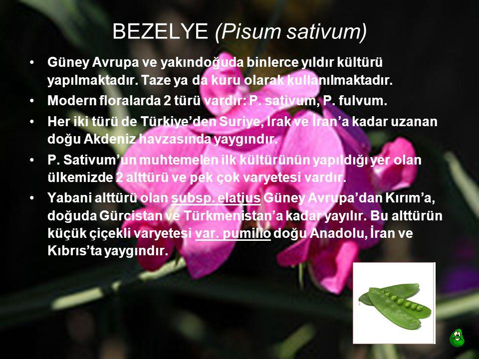 BEZELYE (Pisum sativum) Güney Avrupa ve yakındoğuda binlerce yıldır kültürü yapılmaktadır. Taze ya da kuru olarak kullanılmaktadır. Modern floralarda