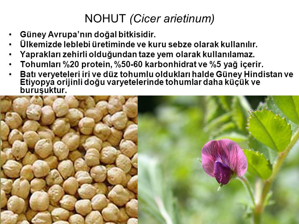 NOHUT (Cicer arietinum) Güney Avrupa'nın doğal bitkisidir. Ülkemizde leblebi üretiminde ve kuru sebze olarak kullanılır. Yaprakları zehirli olduğundan