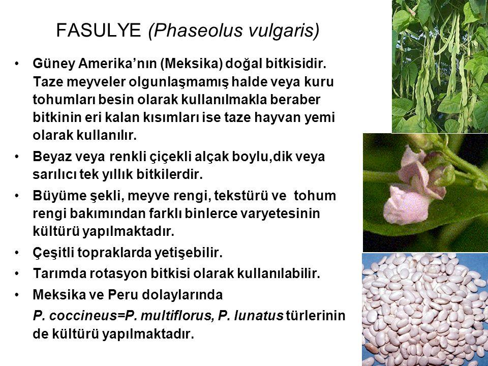FASULYE (Phaseolus vulgaris) Güney Amerika'nın (Meksika) doğal bitkisidir. Taze meyveler olgunlaşmamış halde veya kuru tohumları besin olarak kullanıl