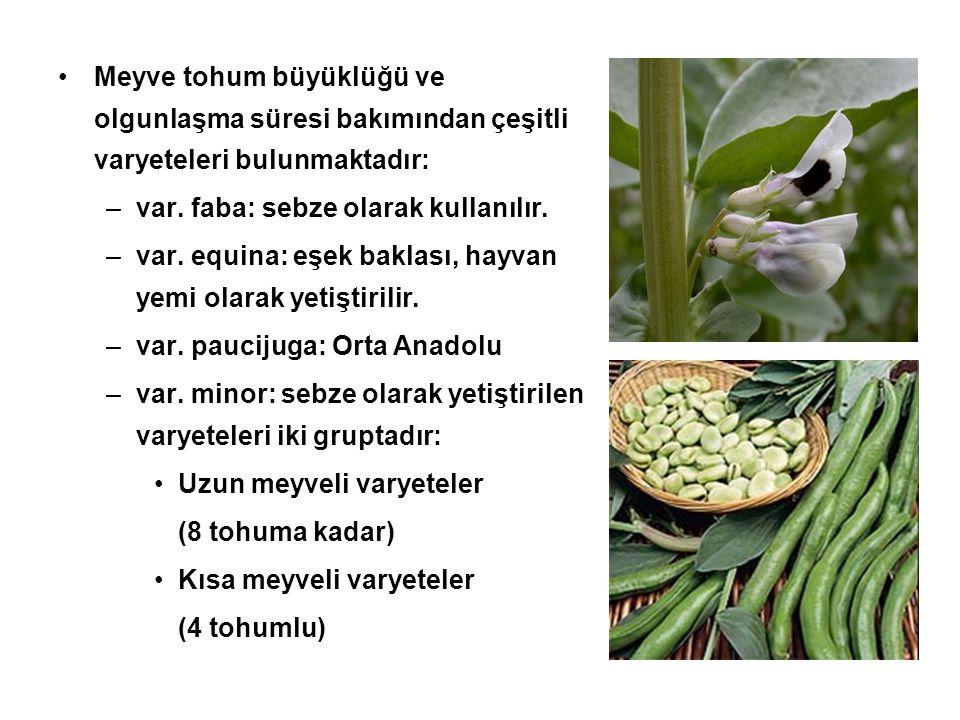 Meyve tohum büyüklüğü ve olgunlaşma süresi bakımından çeşitli varyeteleri bulunmaktadır: –var. faba: sebze olarak kullanılır. –var. equina: eşek bakla