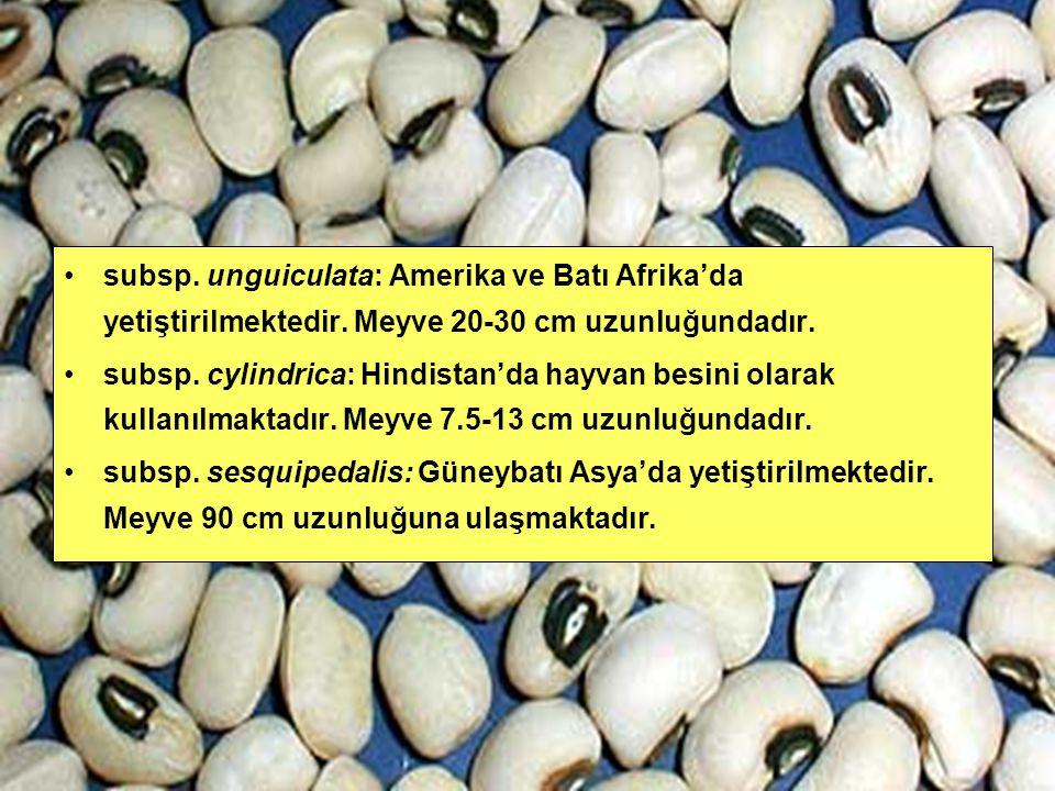 subsp. unguiculata: Amerika ve Batı Afrika'da yetiştirilmektedir. Meyve 20-30 cm uzunluğundadır. subsp. cylindrica: Hindistan'da hayvan besini olarak