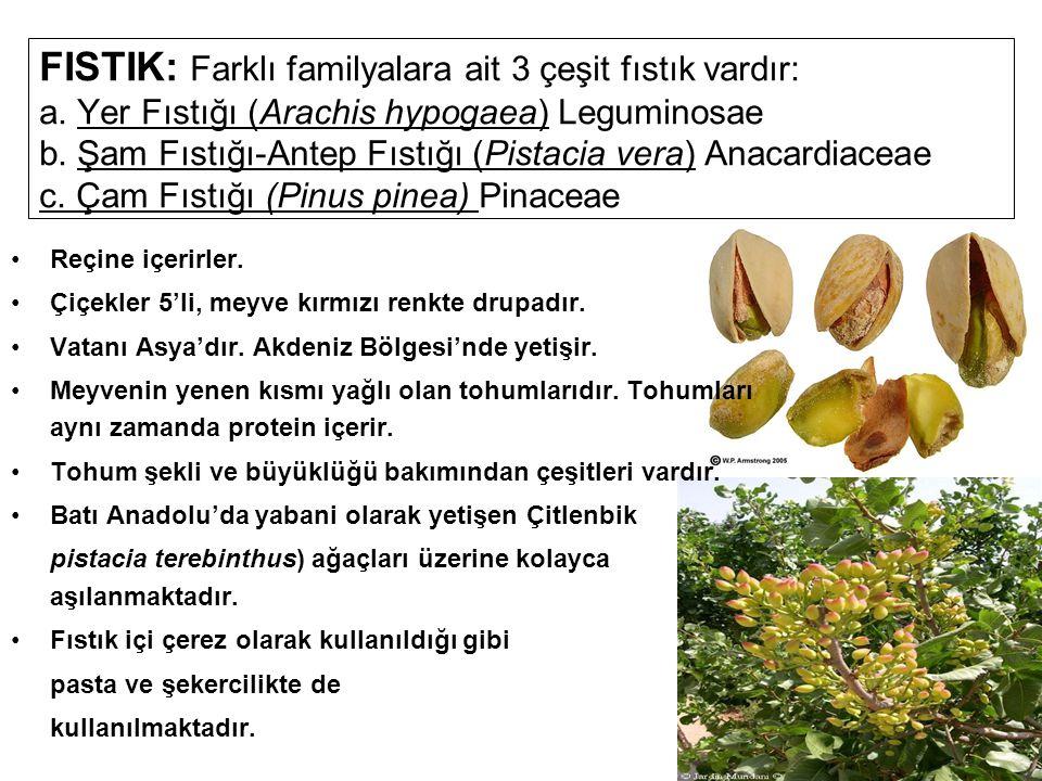 FISTIK: Farklı familyalara ait 3 çeşit fıstık vardır: a. Yer Fıstığı (Arachis hypogaea) Leguminosae b. Şam Fıstığı-Antep Fıstığı (Pistacia vera) Anaca
