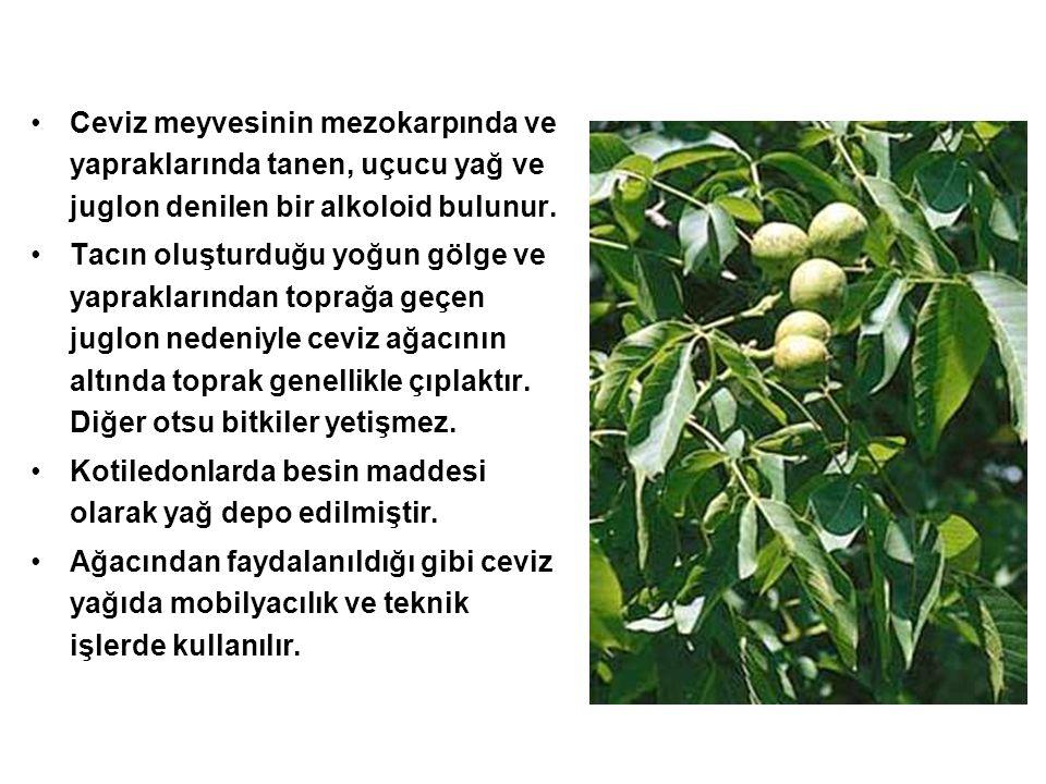 Ceviz meyvesinin mezokarpında ve yapraklarında tanen, uçucu yağ ve juglon denilen bir alkoloid bulunur. Tacın oluşturduğu yoğun gölge ve yapraklarında