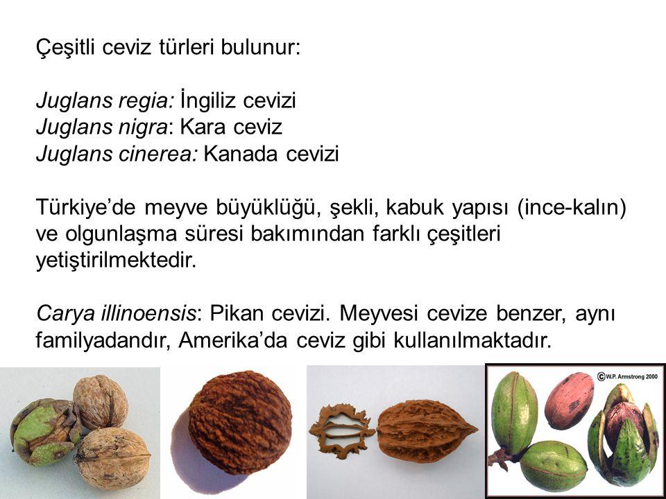 Çeşitli ceviz türleri bulunur: Juglans regia: İngiliz cevizi Juglans nigra: Kara ceviz Juglans cinerea: Kanada cevizi Türkiye'de meyve büyüklüğü, şekl