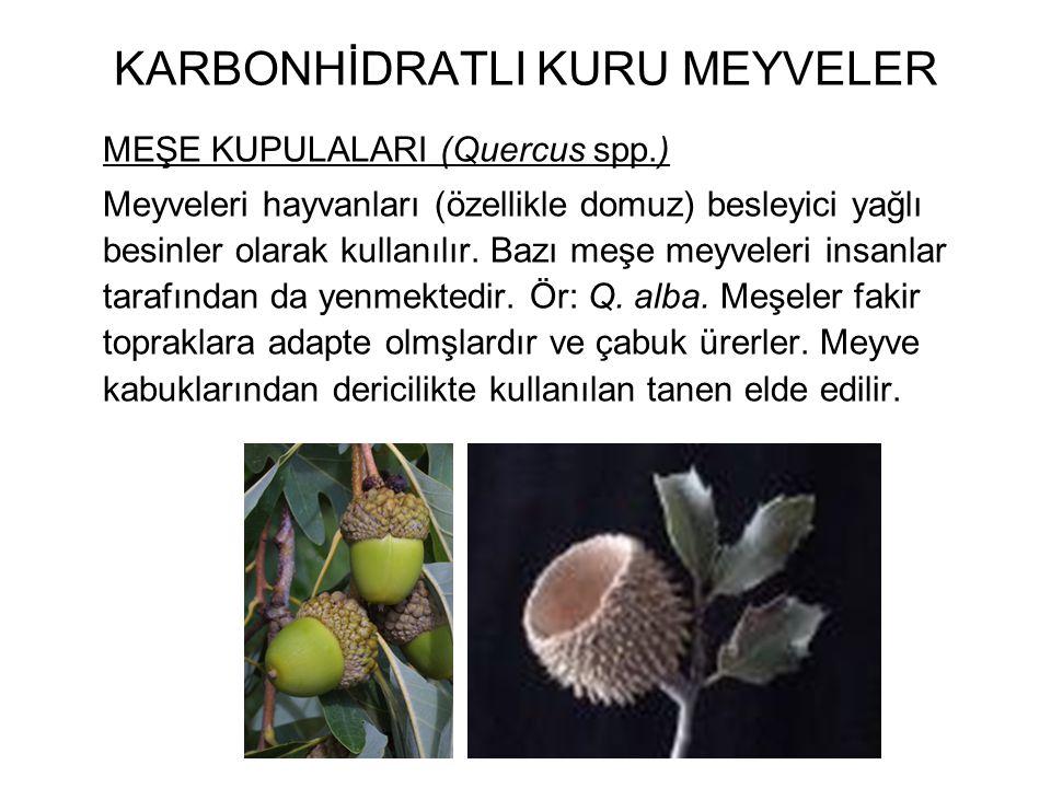 KARBONHİDRATLI KURU MEYVELER MEŞE KUPULALARI (Quercus spp.) Meyveleri hayvanları (özellikle domuz) besleyici yağlı besinler olarak kullanılır. Bazı me