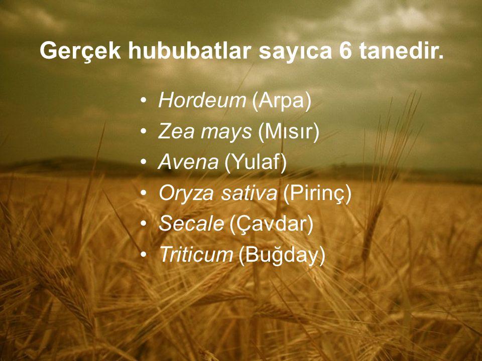 Gerçek hububatlar sayıca 6 tanedir. Hordeum (Arpa) Zea mays (Mısır) Avena (Yulaf) Oryza sativa (Pirinç) Secale (Çavdar) Triticum (Buğday)
