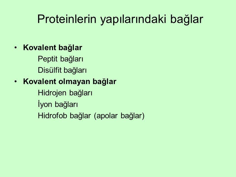 Proteinlerin yapılarındaki bağlar Kovalent bağlar Peptit bağları Disülfit bağları Kovalent olmayan bağlar Hidrojen bağları İyon bağları Hidrofob bağlar (apolar bağlar)