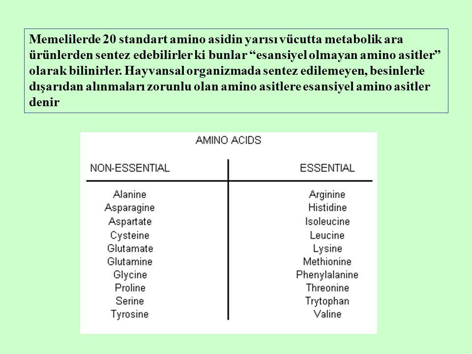 Memelilerde 20 standart amino asidin yarısı vücutta metabolik ara ürünlerden sentez edebilirler ki bunlar esansiyel olmayan amino asitler olarak bilinirler.