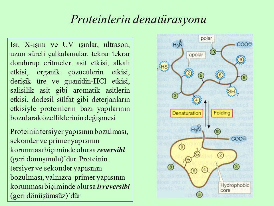 Proteinlerin denatürasyonu Isı, X-ışını ve UV ışınlar, ultrason, uzun süreli çalkalamalar, tekrar tekrar dondurup eritmeler, asit etkisi, alkali etkisi, organik çözücülerin etkisi, derişik üre ve guanidin-HCl etkisi, salisilik asit gibi aromatik asitlerin etkisi, dodesil sülfat gibi deterjanların etkisiyle proteinlerin bazı yapılarının bozularak özelliklerinin değişmesi Proteinin tersiyer yapısının bozulması, sekonder ve primer yapısının korunması biçiminde olursa reversibl (geri dönüşümlü)'dür.