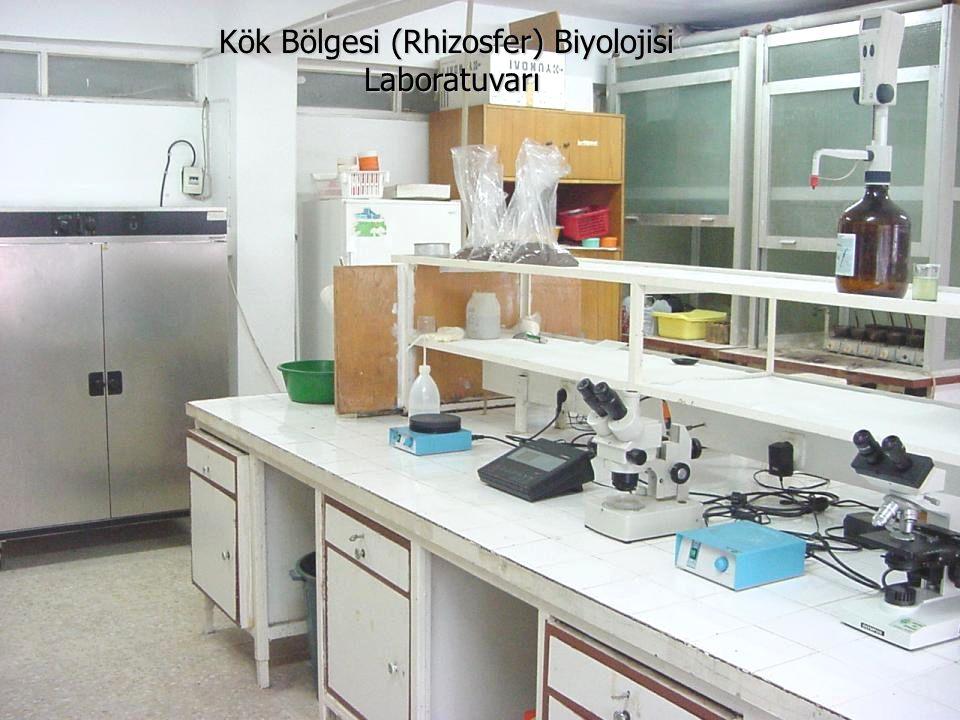 Kök Bölgesi (Rhizosfer) Biyolojisi Laboratuvarı Laboratuvarı