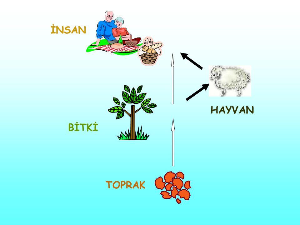Bitki Besleme Laboratuvarı Bitki ve toprak örneklerinde analizler yaparak, serada ve tarlada denemeler yürüterek: Eksikliği görülen elementleri belirlemek Verim ve kalite artışı sağlamak, Hastalık, zararlı ve çevresel olumsuzluklara karşı bitki direncini artırmak