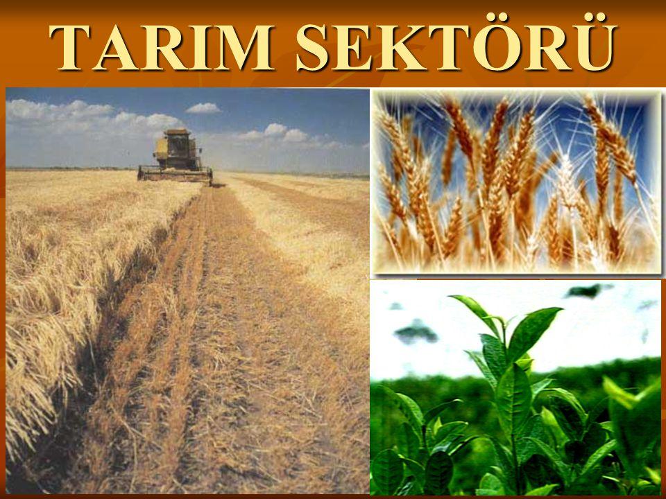 HUMUS: Çürümüş bitki kalıntılarının, toprağın üst kısmında birikmesi ile oluşan tabakaya humus denir.