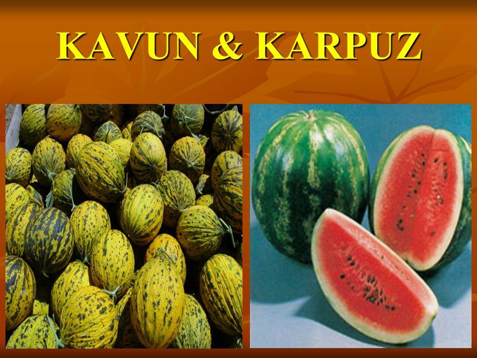 KAVUN & KARPUZ
