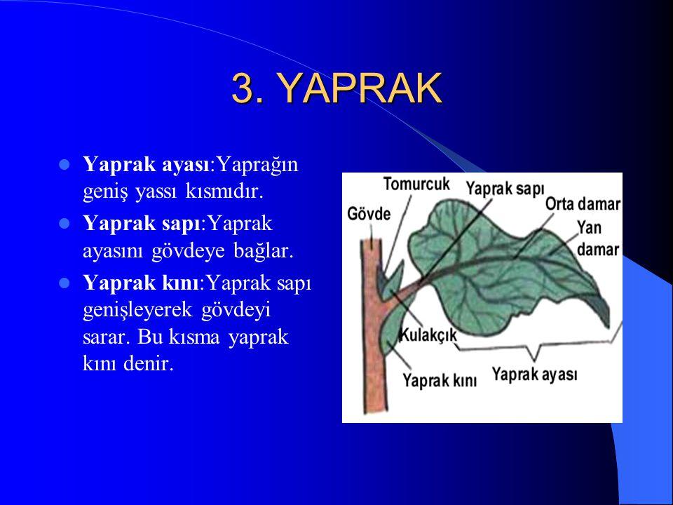 Gövde çeşitleri 1.Odunsu gövde:Ağaçlar(söğüt,meşe,çam vb) 2.Otsu gövde:Sebzeler,tahıllar,baklagiller vb. 3.Sürünücü gövde:Salatalık,kabak,kavun vb. 4.