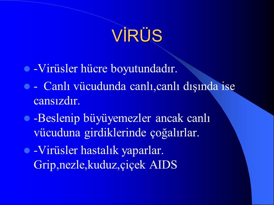 VİRÜS -Virüsler hücre boyutundadır.- Canlı vücudunda canlı,canlı dışında ise cansızdır.