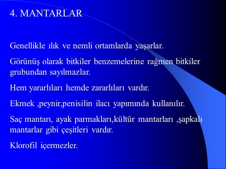 4.MANTARLAR Genellikle ılık ve nemli ortamlarda yaşarlar.