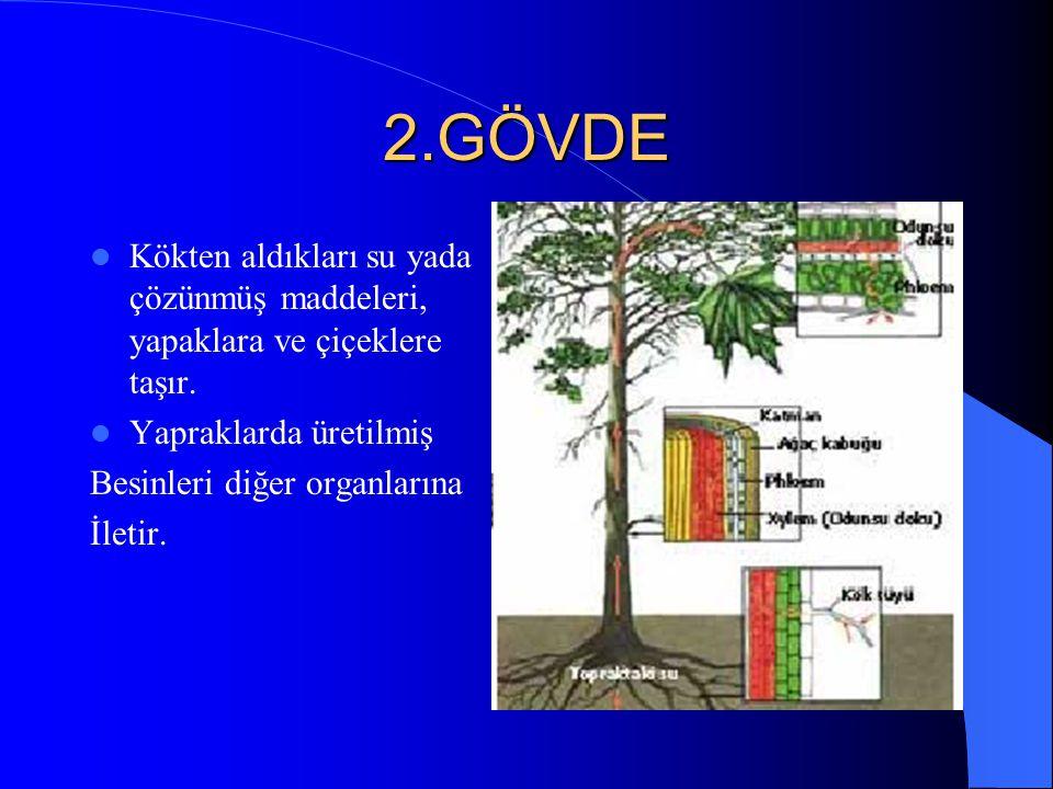 ÇİÇEKLİ BİTKİLERİN BÖLÜMLERİ 1.KÖK Kök bitkiyi toprağa bağlar. Su ve suda çözünmüş minarelleri alıp gövde yapraklara gönderir. 1.Kazık kök 2.Saçak kök