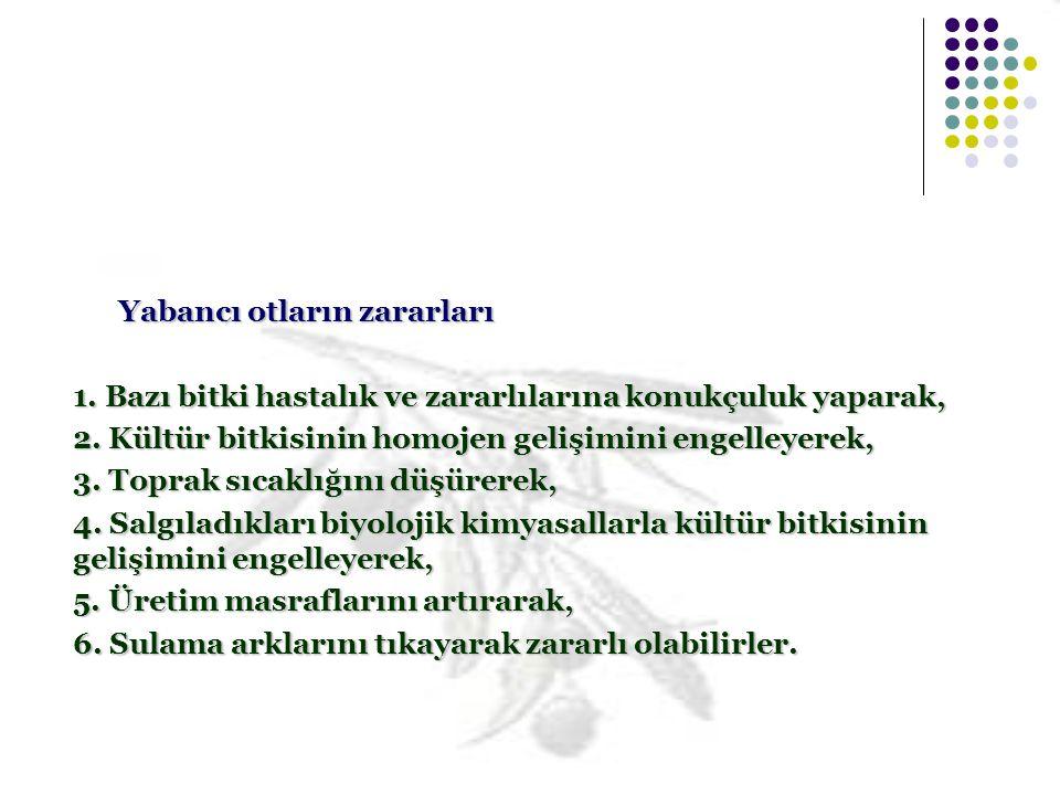 Horoz İbiği Amarantus sp.Kanarya Otu Eenecio vernalis © TATLI, A.