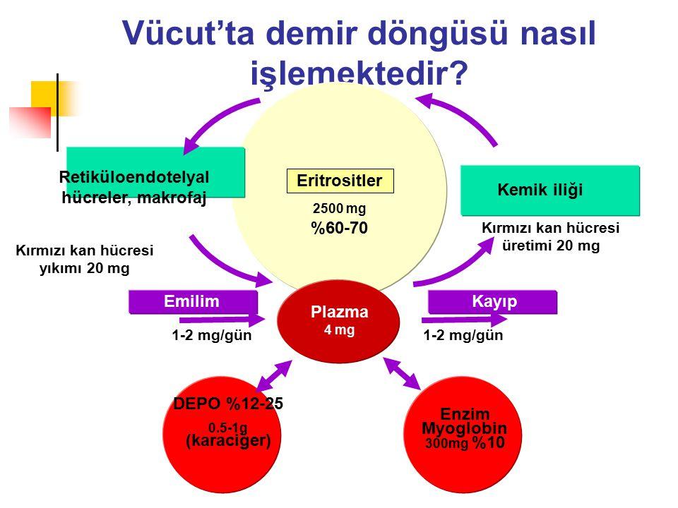 Vücut'ta demir döngüsü nasıl işlemektedir? Retiküloendotelyal hücreler, makrofaj Kemik iliği EmilimKayıp 1-2 mg/gün Plazma 4 mg Eritrositler DEPO %12-