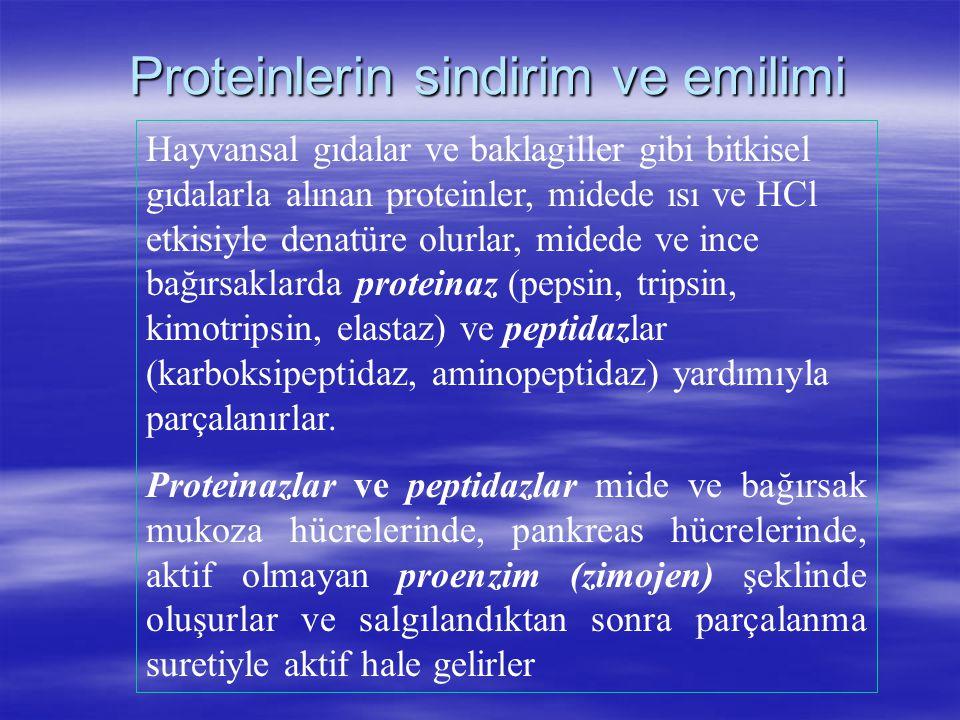 Proteinlerin sindirim ve emilimi Hayvansal gıdalar ve baklagiller gibi bitkisel gıdalarla alınan proteinler, midede ısı ve HCl etkisiyle denatüre olur