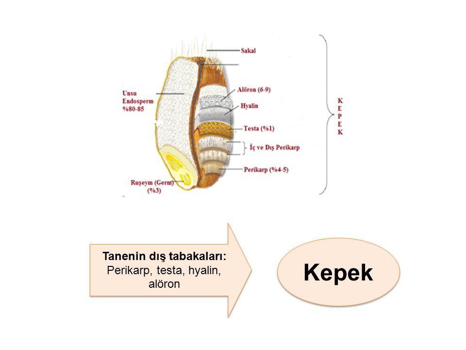 Kepek Tanenin dış tabakaları: Perikarp, testa, hyalin, alöron Tanenin dış tabakaları: Perikarp, testa, hyalin, alöron